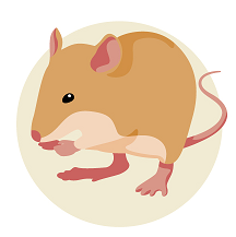 2020 Chinese Astrology Rat